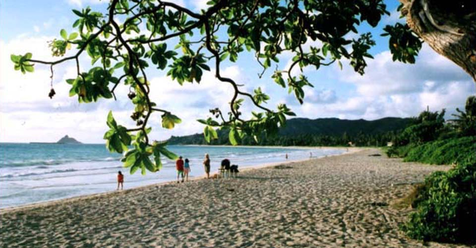 View of the large sandy Kailua Beach looking out from under a shade tree.